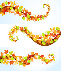Collection of autumn leaves.Vector