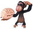 Chimp and brain
