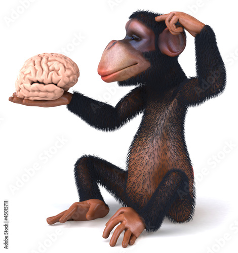 Chimp and brain