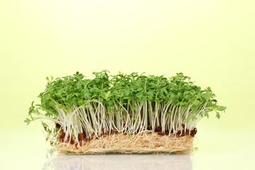 Fresh cress salad on green background