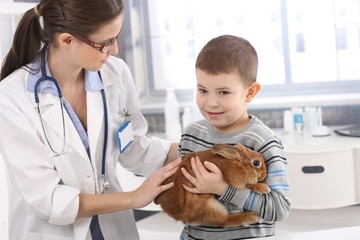 Vet helping little kid with rabbit