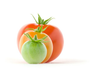 Profit dynamics of tomato