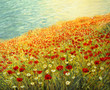Poppies at the Seashore