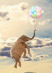 Elephant Flying With Balloon