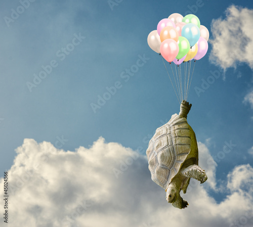 Tortoise Tied With Balloon