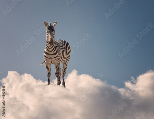 Zebra Standing On Clouds