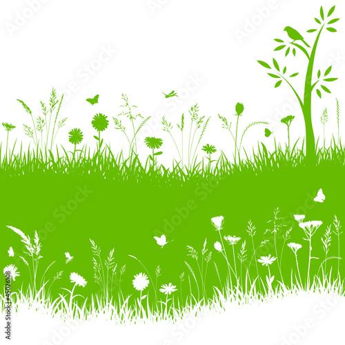 Vektor Gräser Blumenwiese