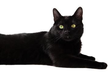 Black cat isolated on white background