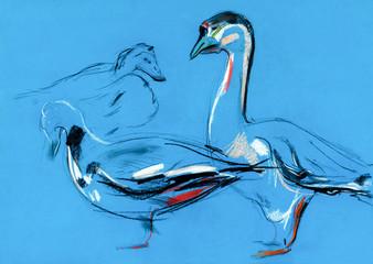 Goose sketch