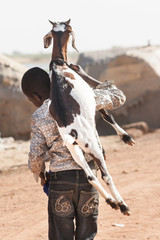 Boy carrying a goat on his back on the road, Timbuktu, Mali.
