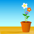 pot flowers vector illustration