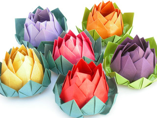 flores de loto 3