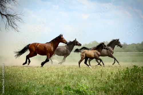 Leinwandbilder,pferd,pferd,galopp,tier