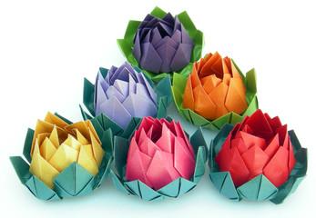 flores de loto 2