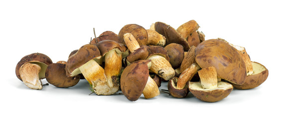 Small pile of yellow boletus mushrooms near.