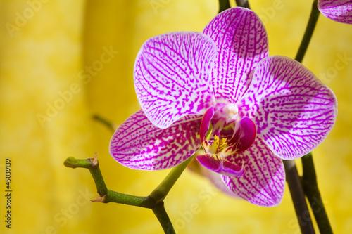 Fototapeten,orchidee,blume,blooming,blühen