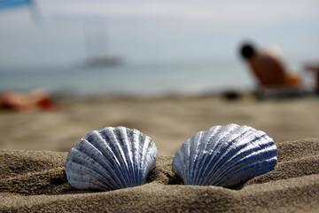 Meer und Strand Muscheln