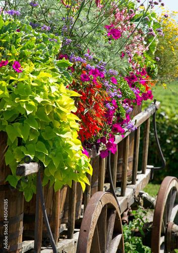 Alter Wagen mit Blumen - Summer Flowers
