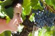 A la vigne