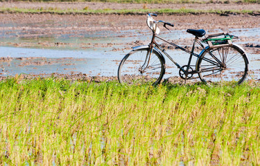 lonely bike waiting, the field in the early morning, the Mekong