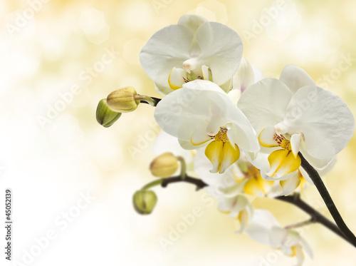 Fototapeten,orchidee,blume,verwischen,flowering