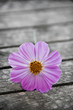 pink flower on old wooden table