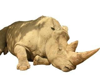 Rinoceronte Africano