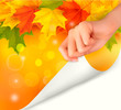 Autumn background with yellow leaves and hand