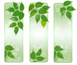 Three nature banners with green fresh leaves .