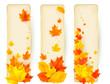 Three autumn banners with colorful leaves in frames