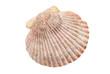 Muschelschale freigestellt - 45057373