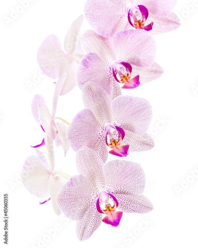Fototapeten,hintergrund,schön,schönheit,blühen