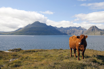 La vache, la mer et les montagnes
