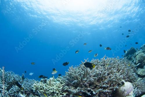 サンゴと小魚と太陽