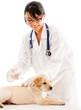 Puppy getting a vaccine