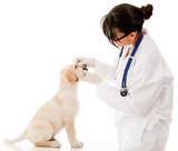 Vet checking a puppy dog