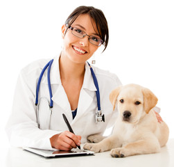 Vet using technology