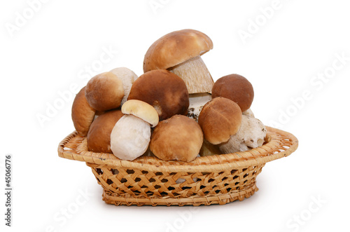 Boletus edulis isolated on white background