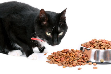 Katze mit Katzenfutter