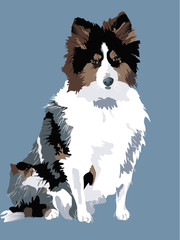 vector of a beautiful sheepdog - eps 10, transparencies