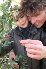 Little boy and father picking berries of a plant