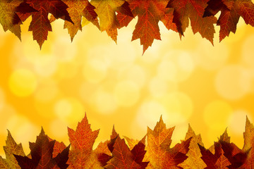 Fall Color Maple Leaves Sunlight Background Border