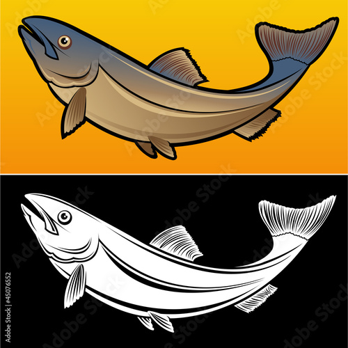 Salmon Fish, 2 versions Illustration