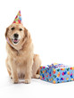 Birthday Golden Retriever