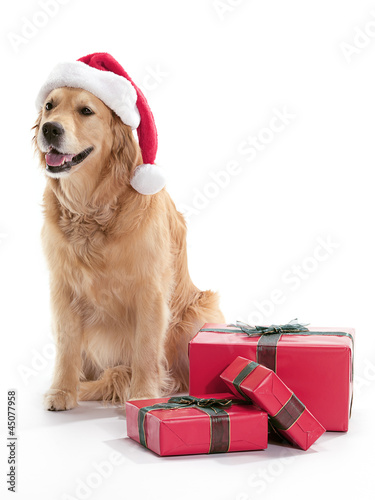 Christmas Golden Retriever