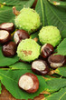 Chestnuts with leaves, on wooden background