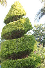 Baum-Spirale