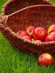 Apfel 15