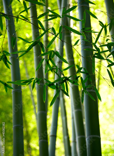 Papiers peints Bambou Bamboo forest background. Shallow DOF
