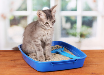 Small gray kitten in blue plastic litter cat